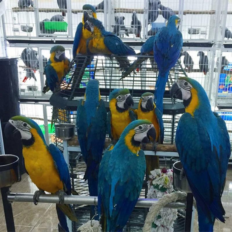 Parrots for sale whatsapp +237699461444 in Arlington, Texas