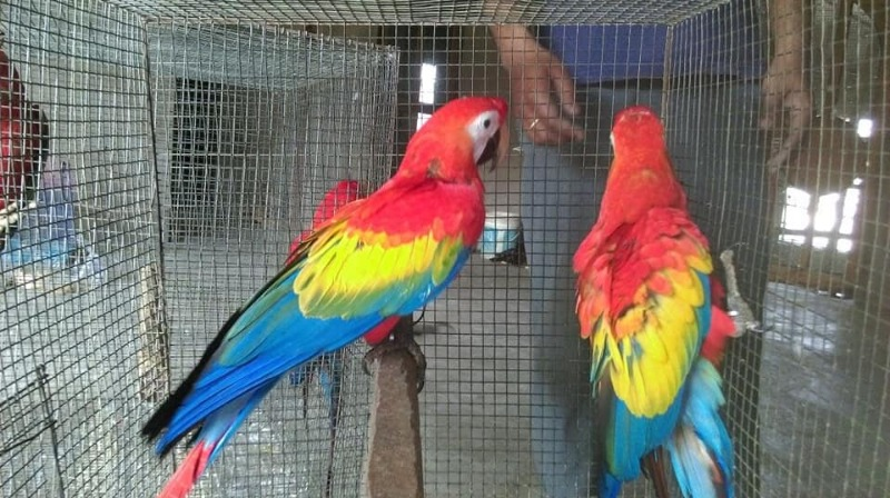 African grey parrots for sale whatsapp +237699461444 in Arlington, Texas
