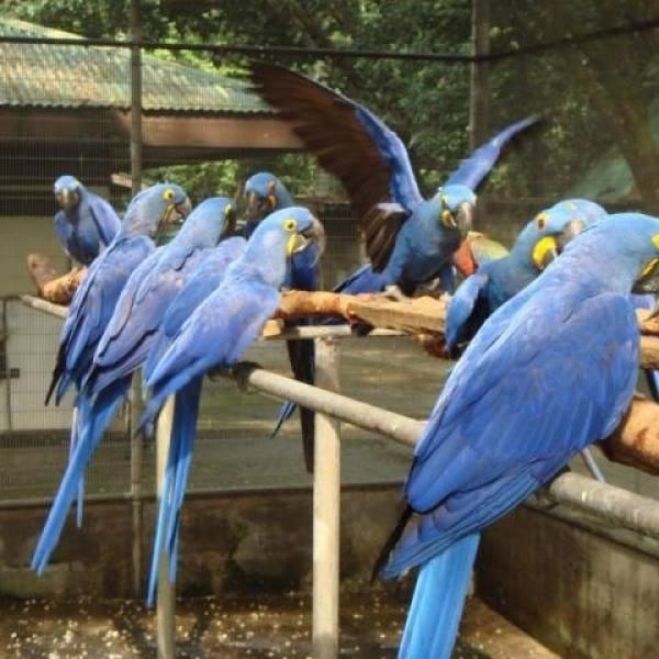 macaws for sale whatsapp +237699461444 in Arlington, Texas