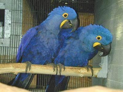 Macaws for sale  in  listed under Pets n Care - Pets