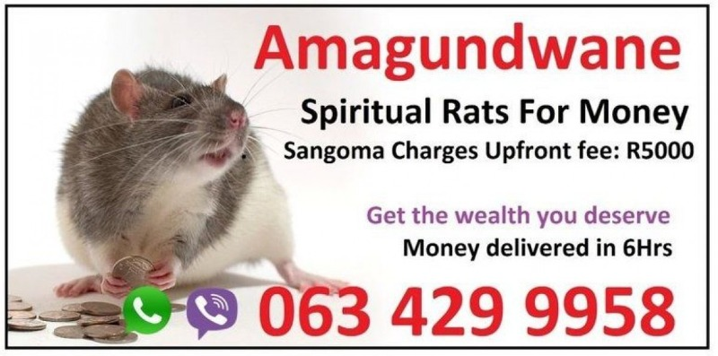Man sells 'spiritual rats' for money spell in South Africa usa Cape Town in  listed under Services - Car Pool