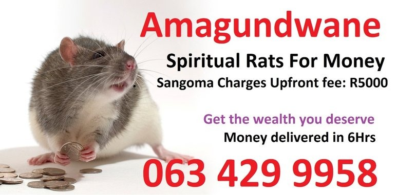 Man sells 'spiritual rats' for money spell in South Africa usa Cape Town, Johannesburg in  listed under Education - Career Counselling