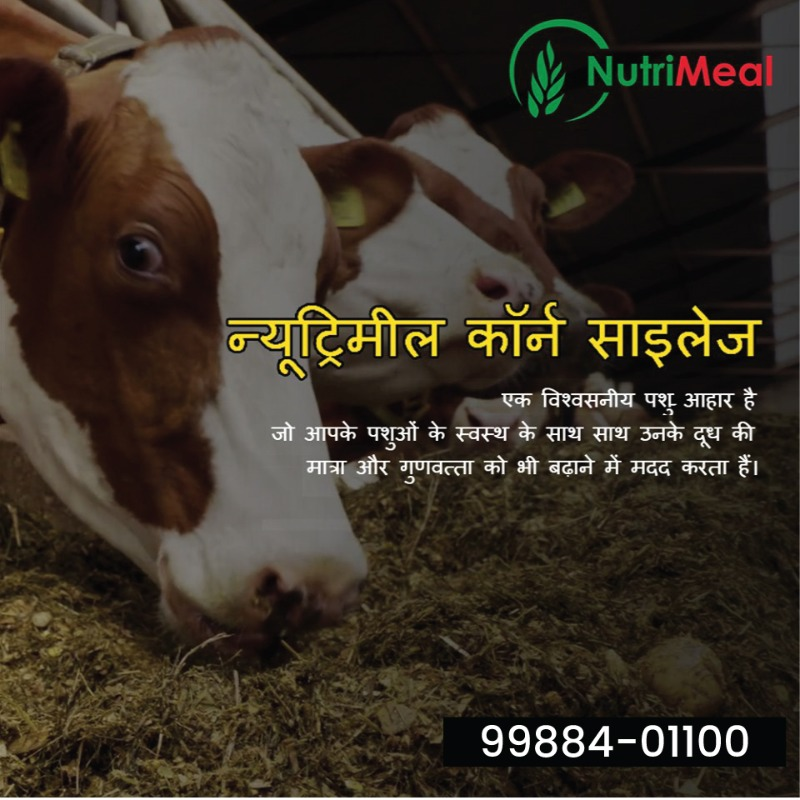 Promaize Silage in  listed under Pets n Care - Pet Foods
